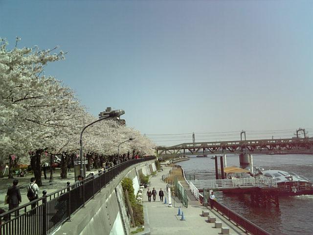 《たまには息抜き!…桜づくし!さくらがいっぱい!》