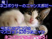 《この度!このブログのマスコットにネコボクサー(ニャン太郎)がデビューしました!》