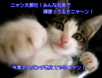 《ちょっと一服!猫ボクサーのニャン太郎登場!》