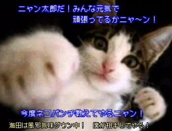 …猫ボクサーのニャン太郎!留守番中!…